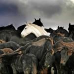 horses2-150x150