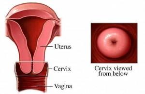 Judith Haleck Cervix, 2
